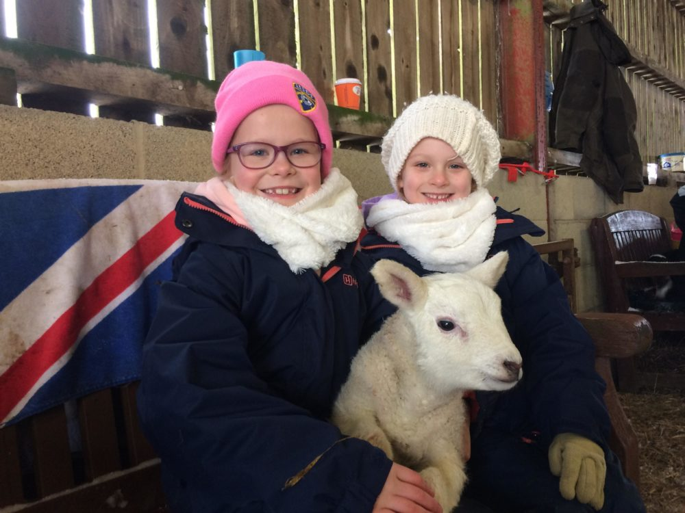 Lambing & Calving Weekends in March!