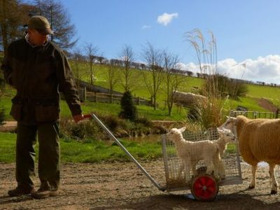 Lambing and Calving With Farmer Percy