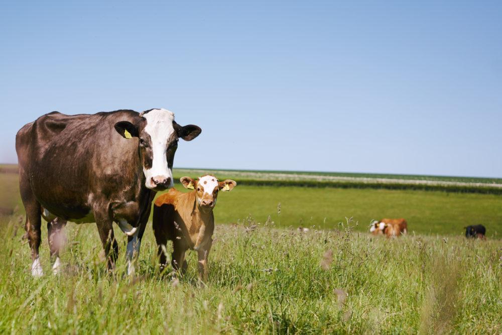 Enjoy walks around the farm looking at the animals!