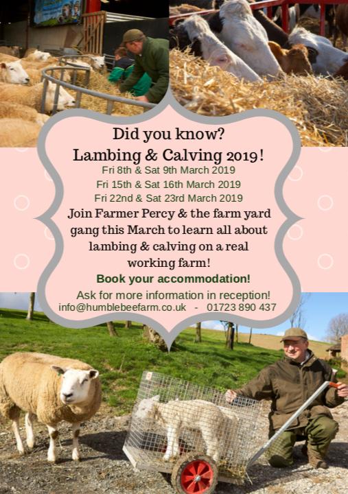 Lambing and Calving 2019
