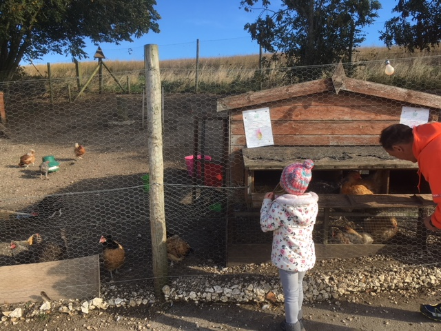 Collect an egg from the hen house!