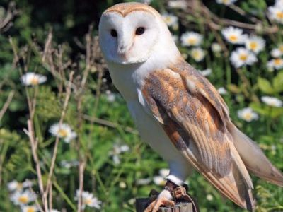 An evening all about owls with Yorkshire Coast Nature